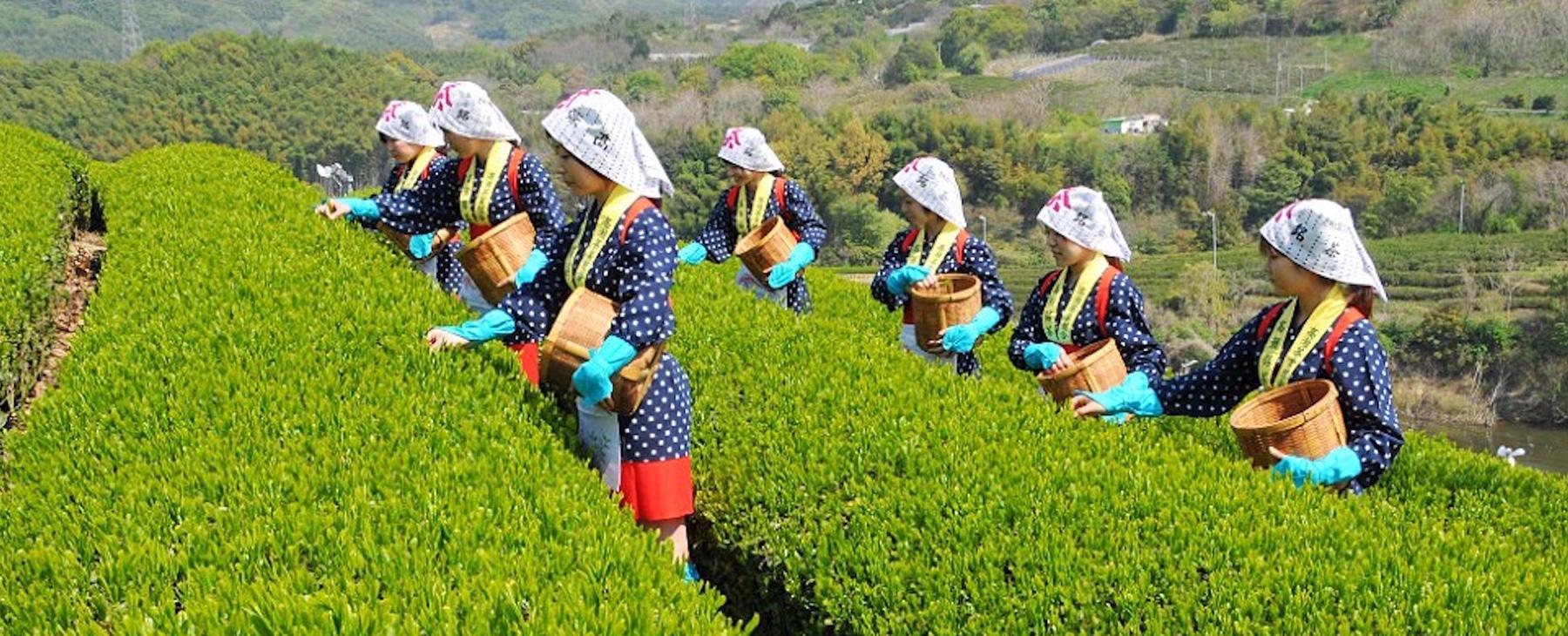 festival del tè bologna 2018