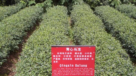 DIVENTA TAC TEA SOMMELIER® – NUOVE DATE CORS0 TEA 104