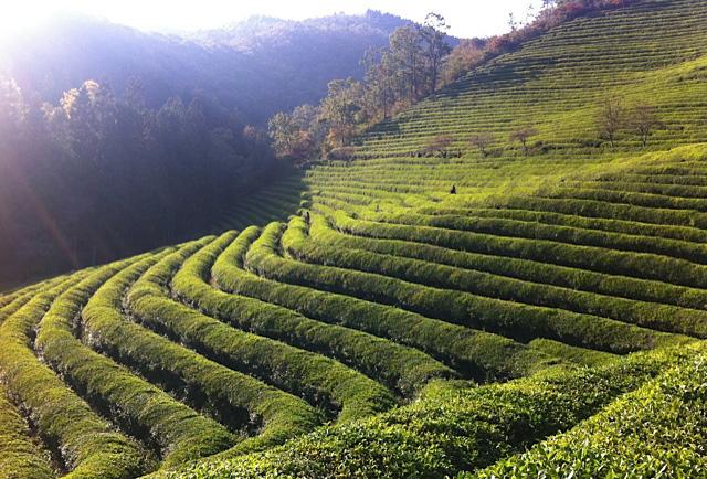 corso tea 101 introduzione al tè