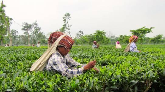Diventa TAC TEA SOMMELIER® – Nuove date corso Tea 102