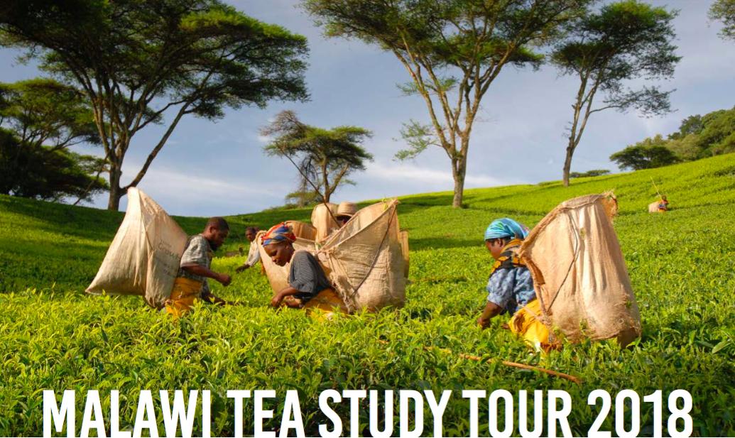MALAWI TEA STUDY TOUR – 4/10 AGOSTO 2018