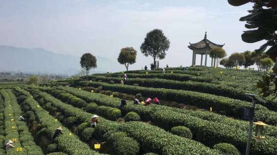 Diventa TAC TEA SOMMELIER® – Nuove date corsi Tea 102 e Tea 108