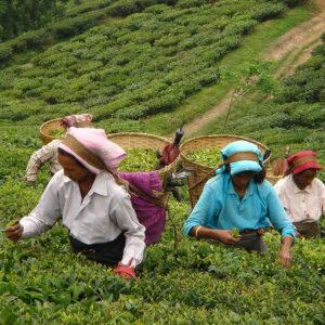 tea-102-corso
